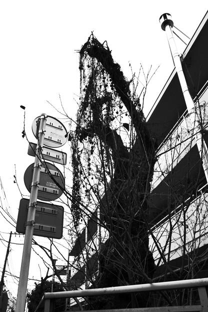 三軒茶屋寸景(2)