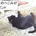 Photos: 猫ちぐらの使い方3