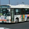 写真: 京成タウンバス T203