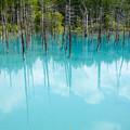 青い池-8