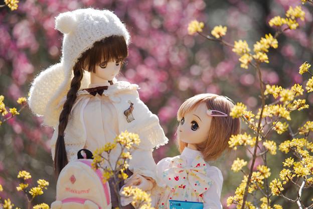 春のお散歩-2