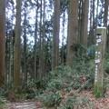 Photos: 1213阿武山8