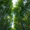 Kyoto #5