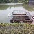 写真: 峠は越したか??  また暗くなってきたが…平木谷大池、ここまでの水位は珍しい。2