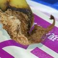 写真: 【今日の味噌ズッペは高田渡の白湯です】~ねらほ。はいっ、おかげさんで今朝もおいしく、ぉぉきにごっそさ~ん♪みたいな(・∀・)3