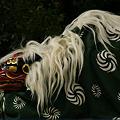 Photos: 獅子舞、鎌倉!(111023)