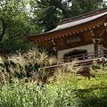 写真: ススキと浄智寺山門0906e