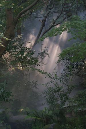 森の奥からミストが!0913m