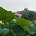 写真: 三重塔と観蓮会!140721