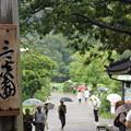 Photos: 三渓園観蓮会!20140721