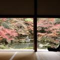 Photos: 晩秋の蓮華寺2015