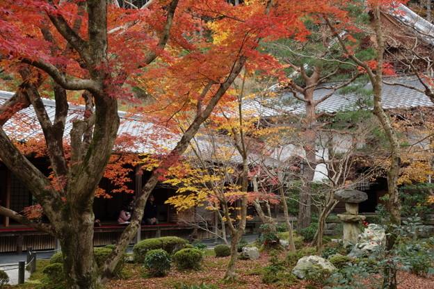 晩秋の圓光寺庭園2015