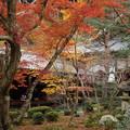 写真: 晩秋の圓光寺庭園2015
