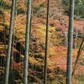 写真: 圓光寺の竹林2015