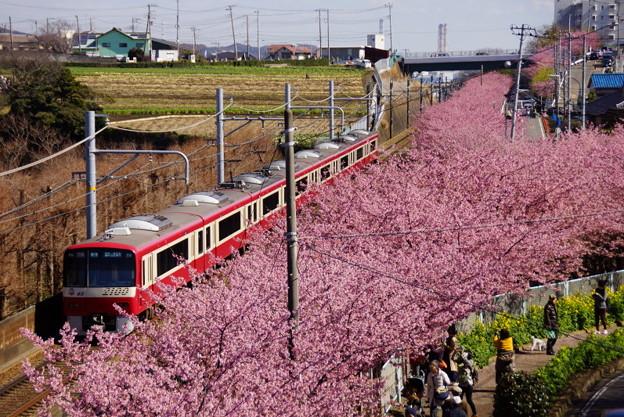 河津桜と赤い電車20160221b