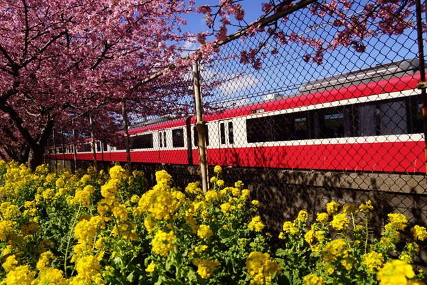 菜の花と赤い電車20160221c