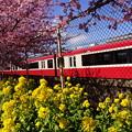 写真: 菜の花と赤い電車20160221c