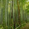写真: 竹林に筍20160502i
