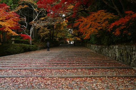 落ちモミジ、石段の参道!(101124)