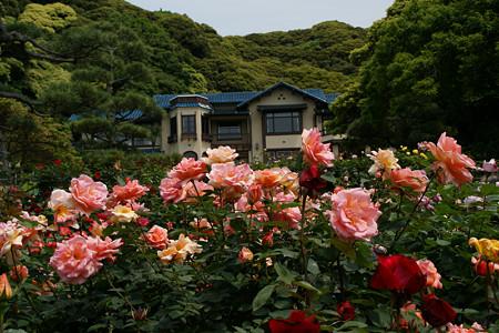 バラまつり鎌倉文学館0517ts