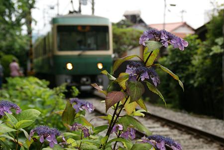 紫陽花と江ノ電0524tb