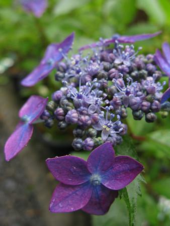 藍姫0531tw