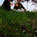 Photos: 昼食は桜の下で