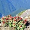 Photos: 絶壁に生える赤い花