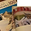 Photos: 写真集に載った!!岩合さんセレクト