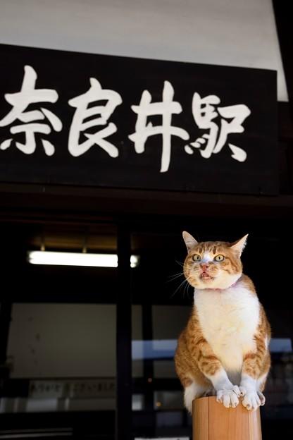 奈良井駅のにゃんこ!