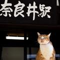 Photos: 奈良井駅のにゃんこ!