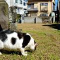 Photos: 牛猫