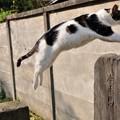Photos: 飛び猫 おっと