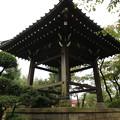 写真: 豪徳寺 (15)