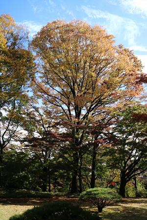 殿ヶ谷戸庭園 (2)