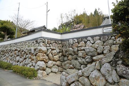 横輪桜 (2)