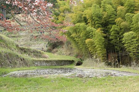 三多気の桜 (2)