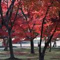 岡山後楽園紅葉