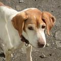Photos: かわらび荘の老犬