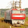 秋の日射し浴びて隅田川へ急ぐ金太郎77号機牽引遅れの3054レ