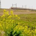 菜の花と蜜蜂とスペーシア