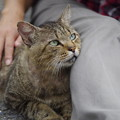 Photos: 捨て猫2