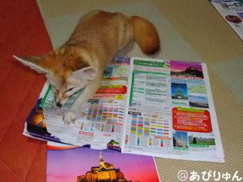 お邪魔狐1