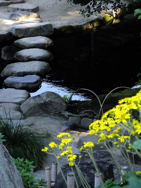 Photos: 飛び石