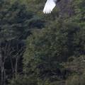 Photos: 放鳥3