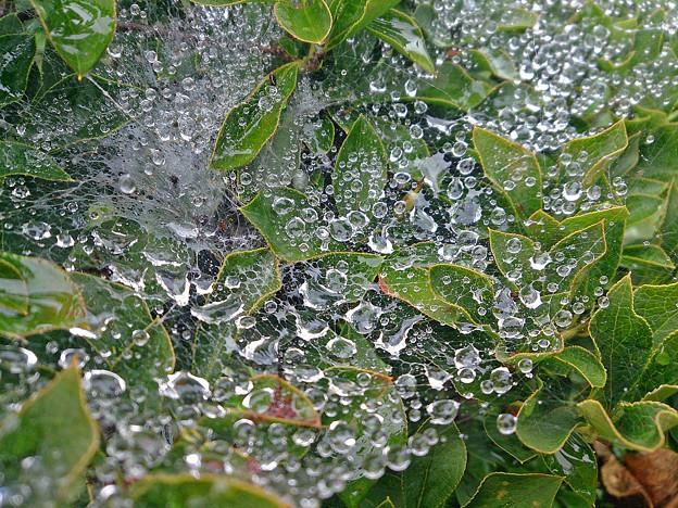 写真: 蜘蛛の巣と水滴