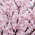 Spring-9703