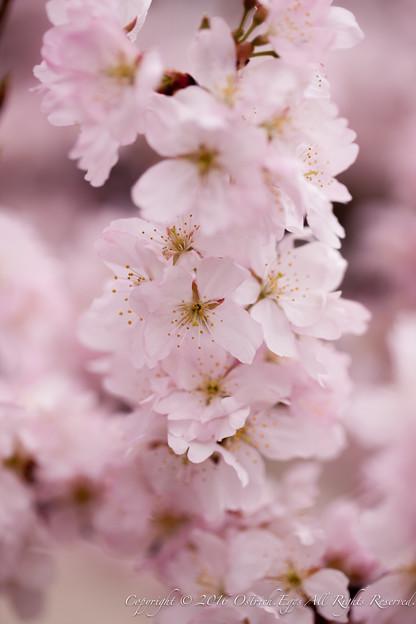 Photos: Spring-9708