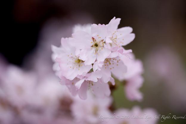 Photos: Spring-9710