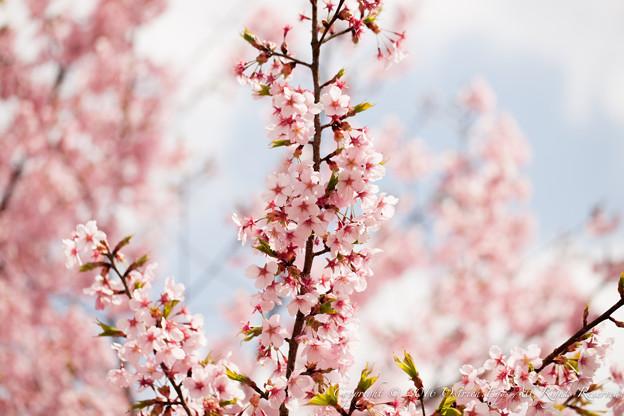 Photos: Spring-9714